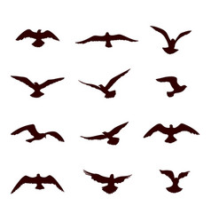 Bird flying silhouette set wildlife icon vector