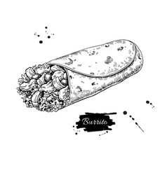 burrito drawing traditional mexican food vector image