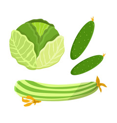 cucumber cabbage collection vector image