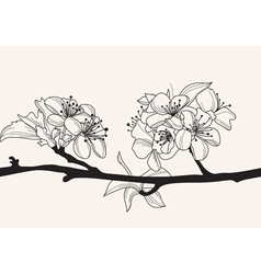 decorative cherry blossom vector image