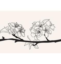 decorative cherry blossom vector image