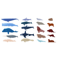 sea mammal water animal character dolphin vector image