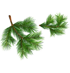 Set of fir branches vector