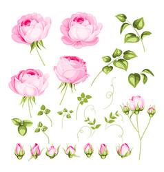 Vintage flowers set vector
