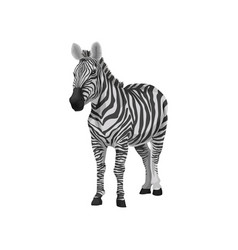 zebra wild african animal on a vector image