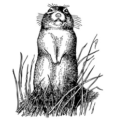 little ground squirrel vector image vector image