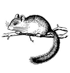 edible dormouse vector image vector image
