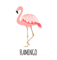 cute pink flamingo in flat style vector image vector image