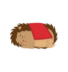 cute hedgehog sleeping sweetly under red blanket vector image
