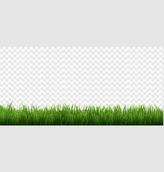 Green grass border isolated transparent background vector