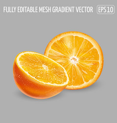 Half and round orange slice on a gray background vector