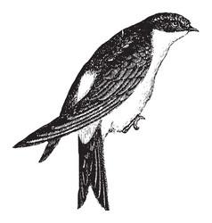 Swallow vintage vector