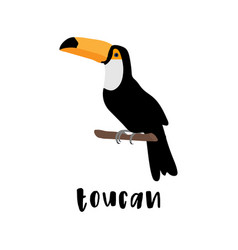 toucan bird cartoon character cute toucan flat vector image