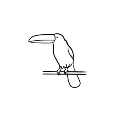 toucan hand drawn sketch icon vector image