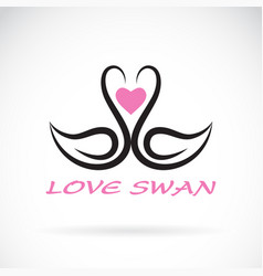 two swan and heart on white background bird vector image