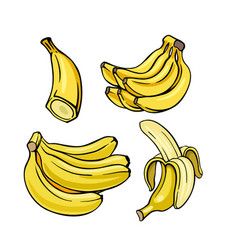 yellow bananas set on white background vector image
