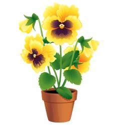 pansy vector image vector image