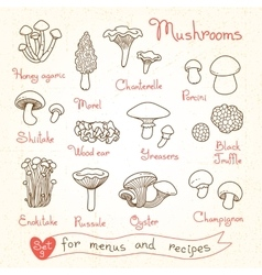 Set drawings of mushrooms for design menus vector image