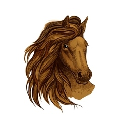 Arabian brown horse portrait vector