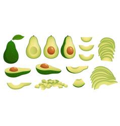 cartoon avocado ripe avocados fruits healthy vector image