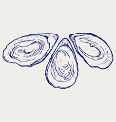 Fresh opened oyster vector
