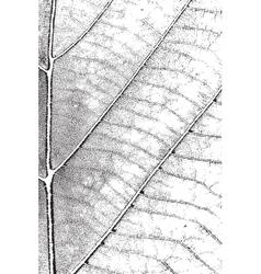 Leaf Overlay Texture vector