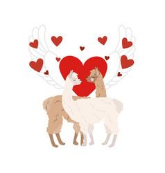 Llama in love vector