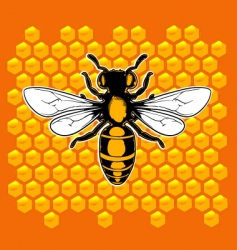 realistic bee vector image