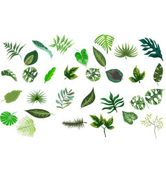 set tropical leaves various plants isolated vector image