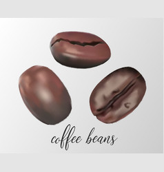 three coffee beans vector image
