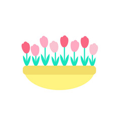tulips grown in clay pot spring flowers vector image
