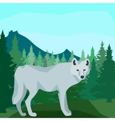 Wolf in the coniferous forest animals and nature vector image