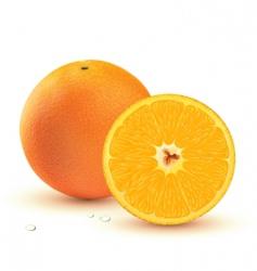 juicy orange vector image