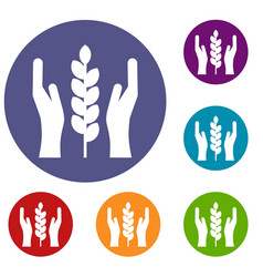 Hands and ear of wheat icons set vector