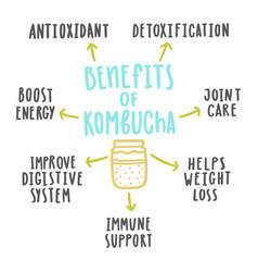 Health benefits kombucha vector
