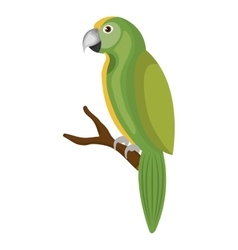 Parrot bird isolated icon vector