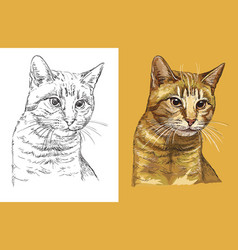 portrait cute ginger cat vector image