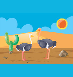 two ostriches in the desert vector image