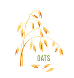 Oats cereals grain vector