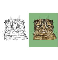Portrait cute scottish fold cat vector