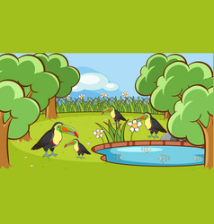 scene with toucan birds in park vector image