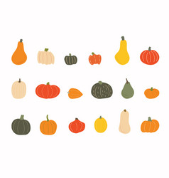 set differend pumpkins autumn set elements vector image