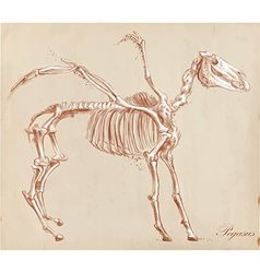 An hand drawn Pegasus vector