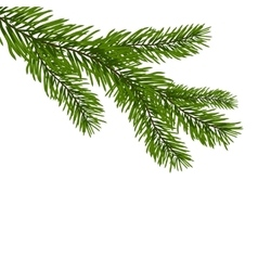 Green realistic branch of fir Fir branches vector