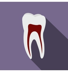 Human tooth flat icon vector