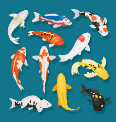 Japanese fish carp and vector