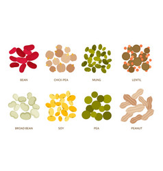 Legumes beans set in flat style isolated vector