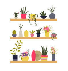shelves with plants and vases of flowers vector image