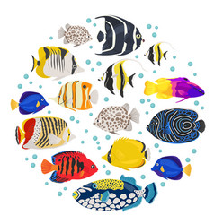 freshwater aquarium fish breeds icon set flat vector image