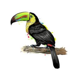 toucan tropical bird from a splash watercolor vector image